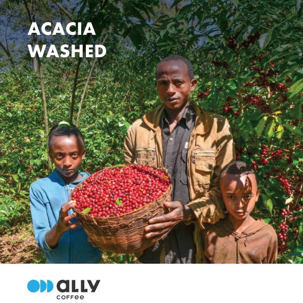 Ethiopia Acacia